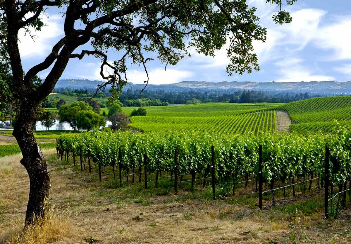 Napa Wine Tours Silverado Trail